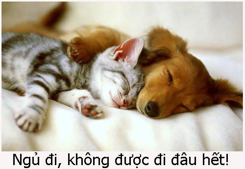 Những Lời Chúc Buổi Tối Lãng Mạn Đưa Người Yêu Vào Giấc Ngủ Sâu