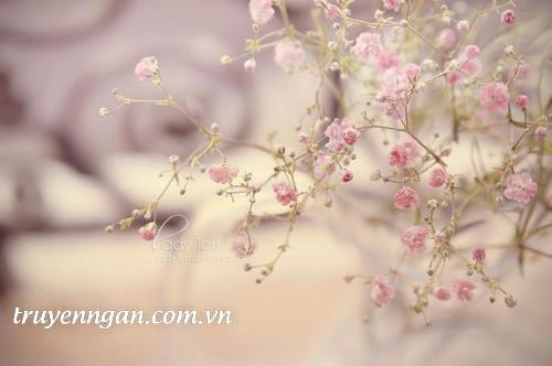 Cô gái trong vườn hoa Mặt Trời