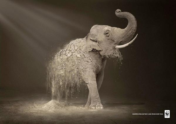 Quá trình sa mạc hóa khiến 6.000 loài động vật hoang dã biến mất mỗi năm.