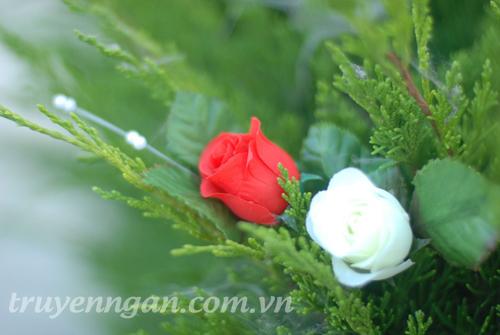 Hoa hồng trắng và hoa hồng đỏ