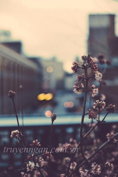 Cho những ngày cả nỗi buồn cũng bỏ ta đi
